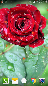 Rose raindrop live wallpaper by live wallpaper hongkong rose raindrop live wallpaper altavistaventures Images
