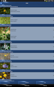 Wild Flower Id Automatic Recognition British Isles By Sunbird