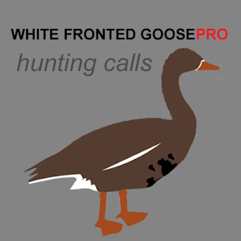 the flightless goose called gilbert essay Fun facts about ducks for kids ducks can see well underwater ducks eat grain, seeds, nuts, fruit, insects, water plants and even small fish ducks are social they live in groups called rafts or teams.
