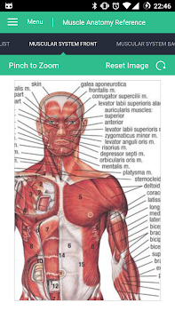 Muscle Anatomy Reference Guide