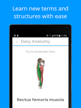 Daily Anatomy: Flashcard Quizzes to Learn Anatomy - by Kenhub - #7 ...