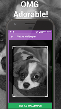 Yorkie Cute Puppy Free Dog Wallpapers By Hackskill Lifestyle