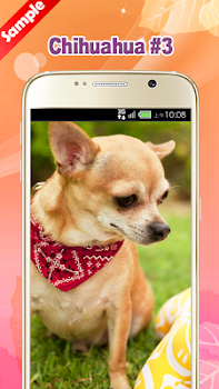 Chihuahua wallpaper by pinza entertainment category 16 reviews chihuahua wallpaper chihuahua wallpaper chihuahua wallpaper chihuahua wallpaper voltagebd Images