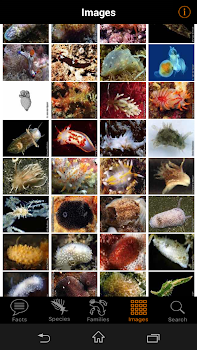 nudibranch id eatlantic med by gary cobb books reference