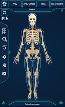 My Skeleton Anatomy - by visual 3d science - Medical Category - 204 ...
