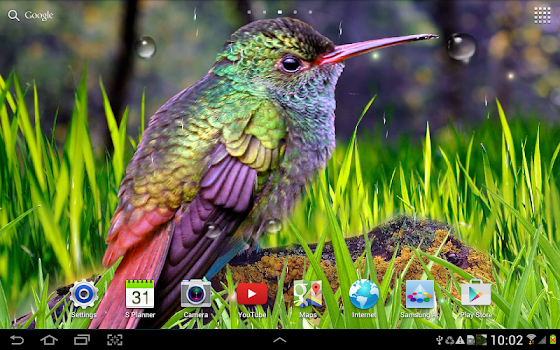 hummingbirds live wallpaper by amax lwps personalization