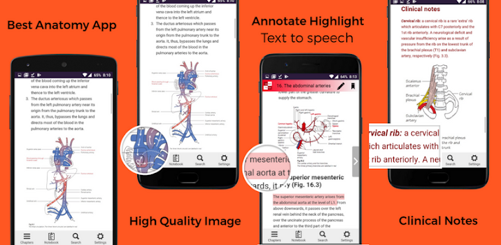 Anatomy FlashCards - by SmartMedi.co - Medical Category - 1 Reviews ...