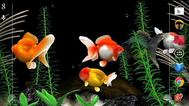 Gold fish 3d live wallpaper by rooty pict personalization gold fish 3d live wallpaper voltagebd Choice Image