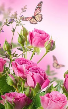 hd rose flowers live wallpaper by forever wallpapers