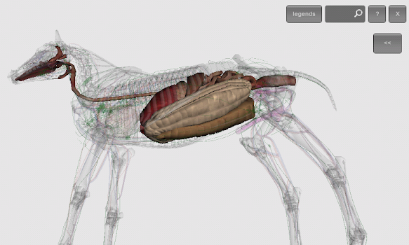 3d Horse Anatomy Software By Biosphera Education Category 77