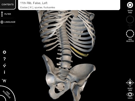 Skeletal System - 3D Anatomy - by Catfish Animation Studio - Medical ...
