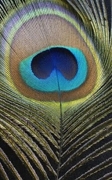 Hd Peacock Feather Wallpaper By Forever Wallpapers