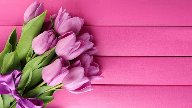 Pink tulips live wallpaper by live wallpaper hq personalization pink tulips live wallpaper altavistaventures Images
