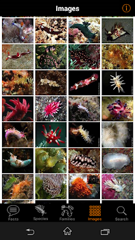 nudibranch id indo pacific by gary cobb books reference