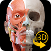 Muscle | Skeleton - 3D Atlas of Anatomy