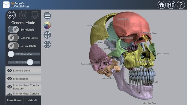 3D Skull Atlas - by UpSurgeOn - Medical Category - 757 Reviews ...
