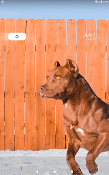 1ae48e5d7d4 Pitbull Wallpapers - by Hit Mobile - Category - 16 Features   1