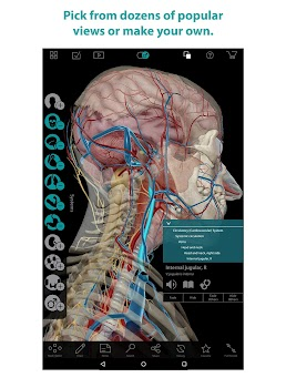 Human Anatomy Atlas - by Visible Body - Medical Category - 3,839 ...