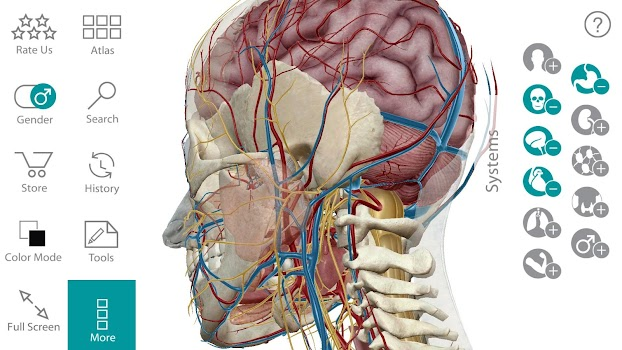 Human Anatomy Atlas By Visible Body Medical Category 3865